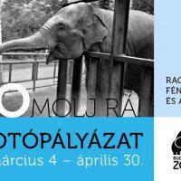 Budapesti Állatkert fotópályázata: ZOOmolj rá!